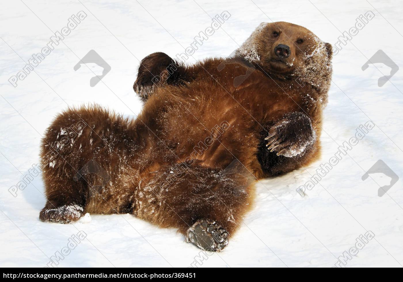brown, bear - 369451