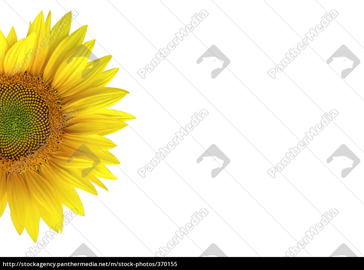 exempted, half, sunflower - 370155