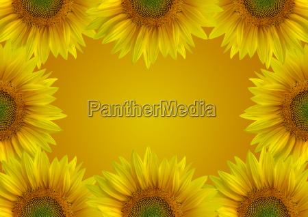 sunflower, background - 370097