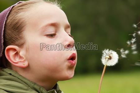 blow, pusteblume - 371619