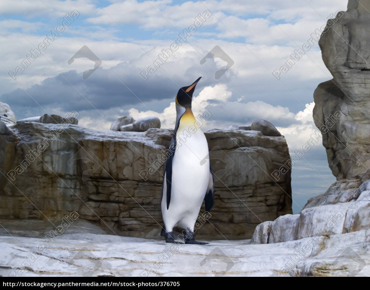 penguin - 376705