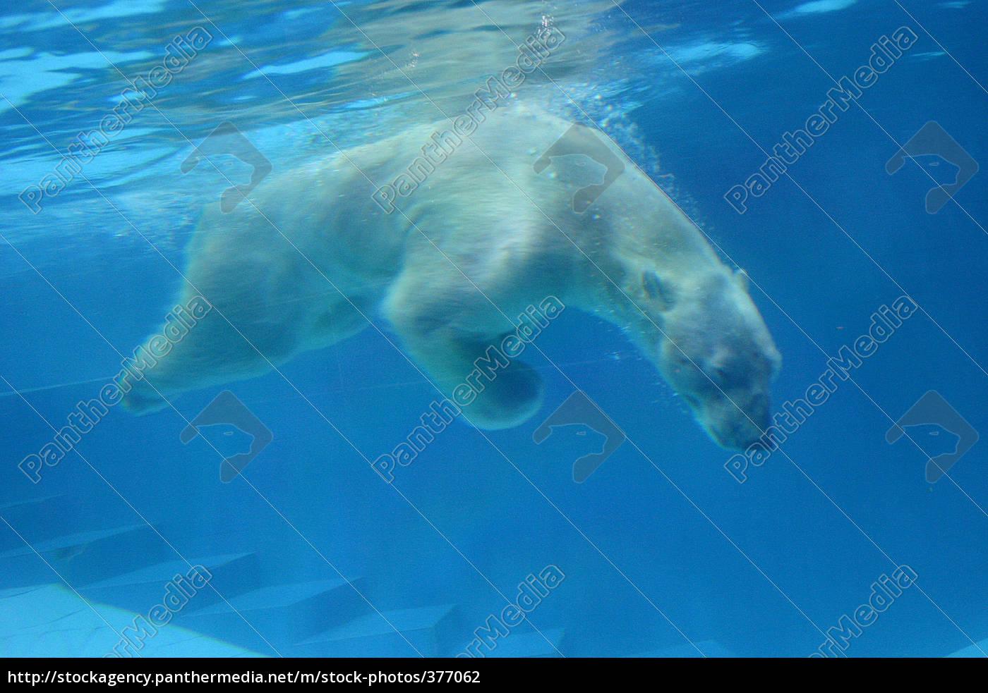 submerged - 377062