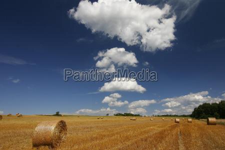 golden, field - 379333