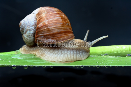 snail, ii - 379054