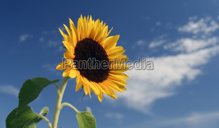 sunny - 388790