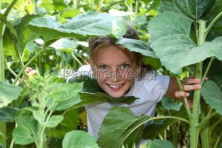 hide, and, seek, in, sunflower, field - 391693
