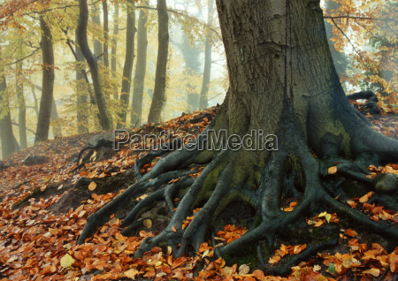 tree, roots - 392981