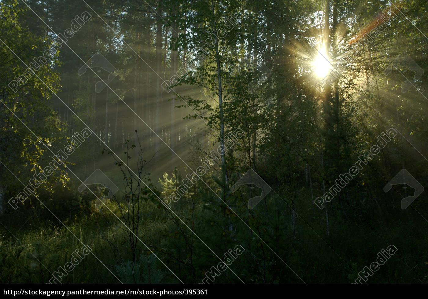 sunbeams - 395361