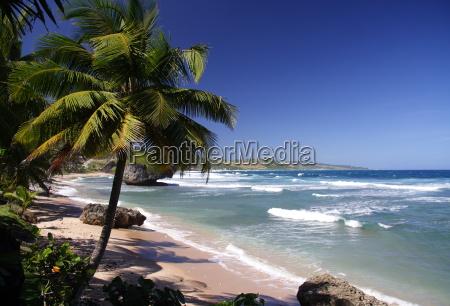 tropical, beach - 401935