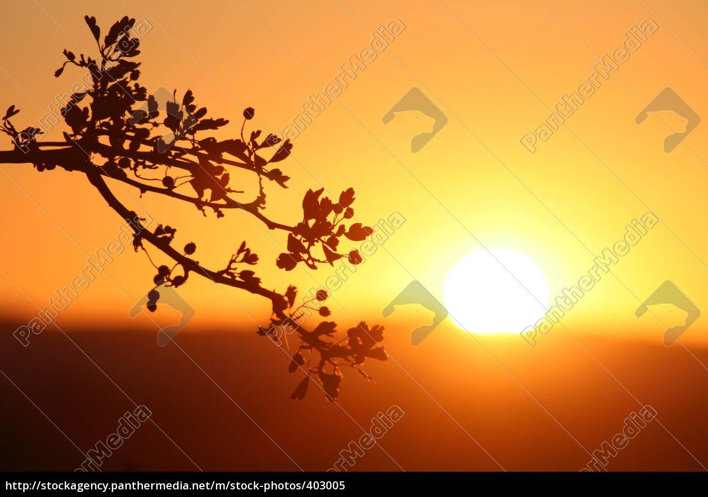 last, sunrays - 403005