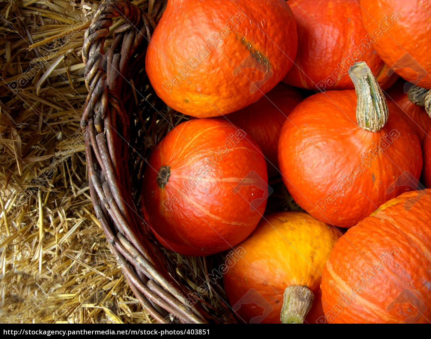 pumpkins, 4 - 403851
