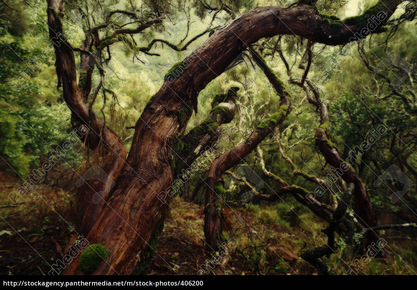 madeira, märchenwelt - 406200