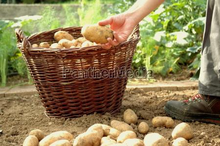 gardener, pride - 411051