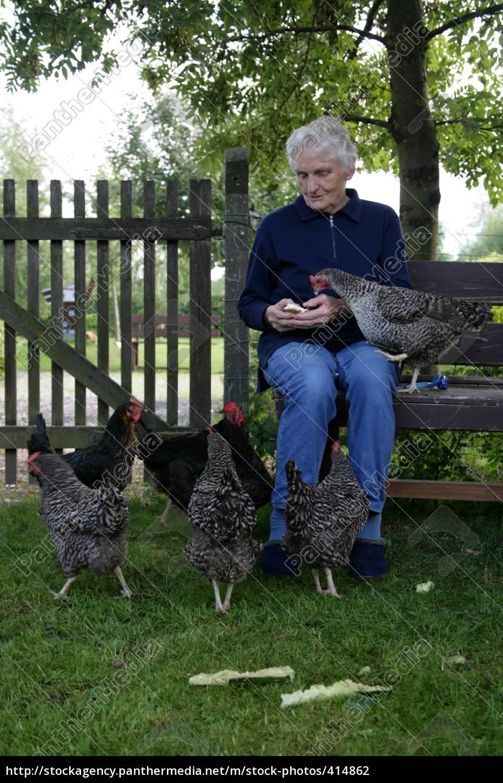 my, chickens - 414862