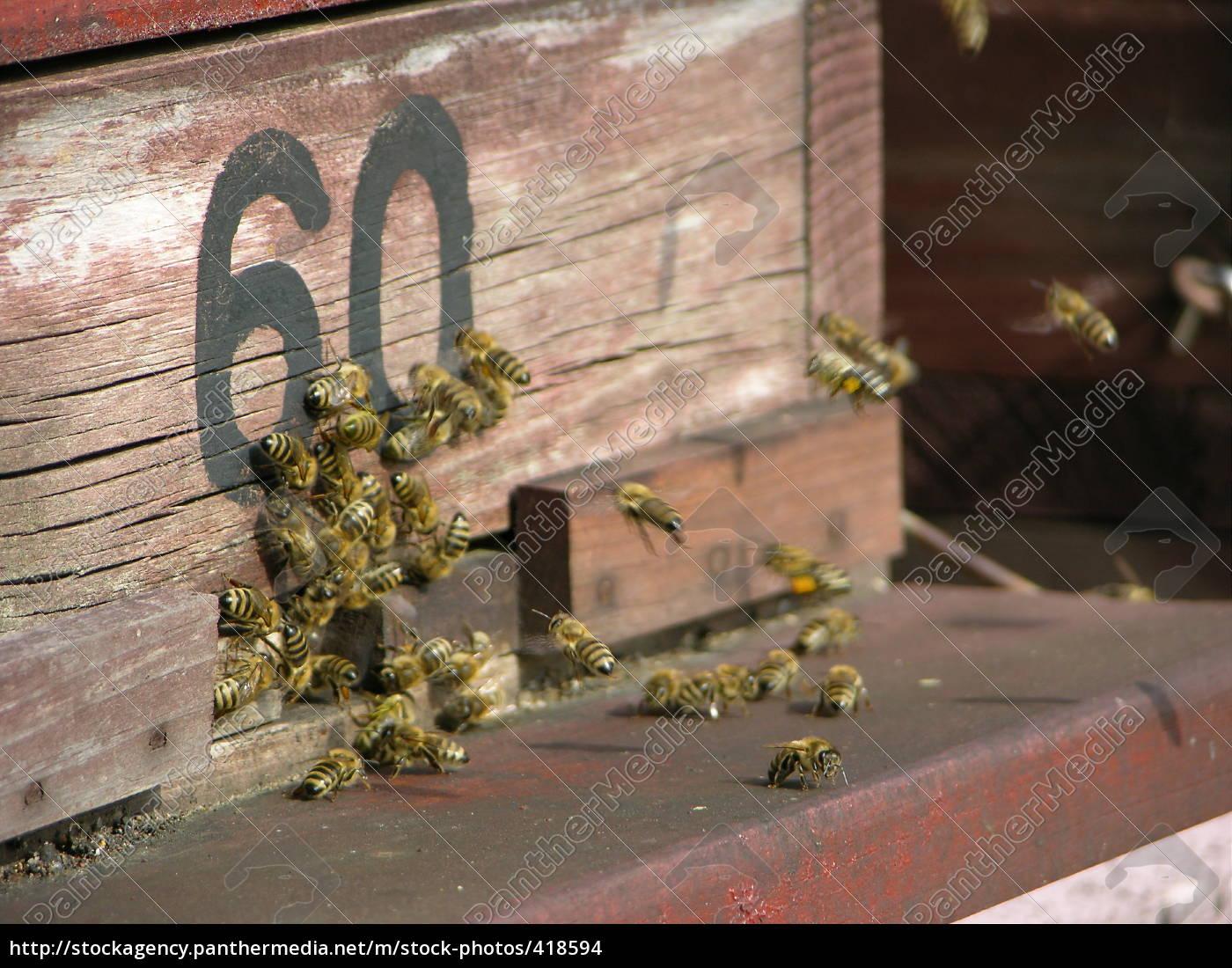beehive - 418594