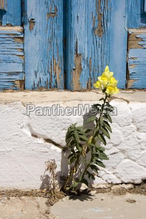 wallflower - 419150