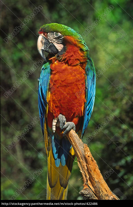 parrot - 422486