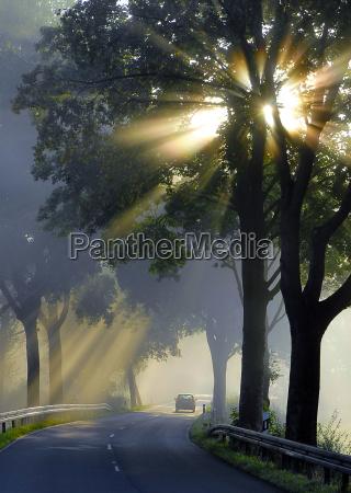 autumn, light - 424485