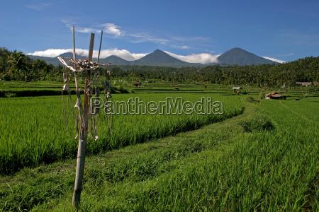 rice terraces 2