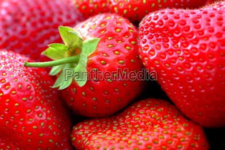 strawberries - 426248