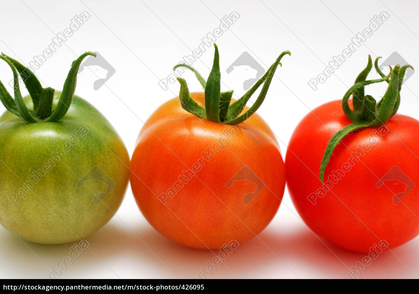 tomatoes - 426095