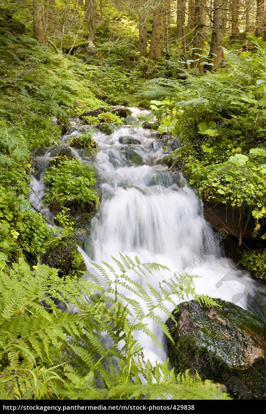 forest, creek - 429838