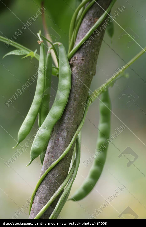 skein, beans - 431008