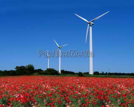 wind, turbines, behind, mohnfeld - 434492