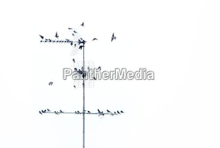 flock 01