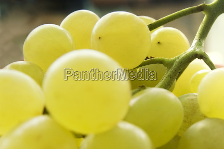 grapes - 439570