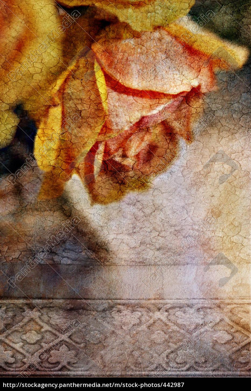 rose - 442987