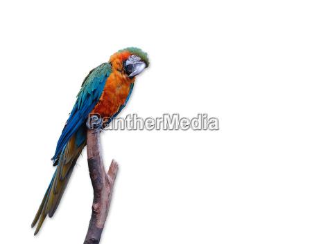 parrot - 450323