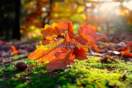 autumnal, forest, floor - 452955