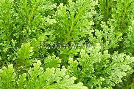 plant, texture - 453157