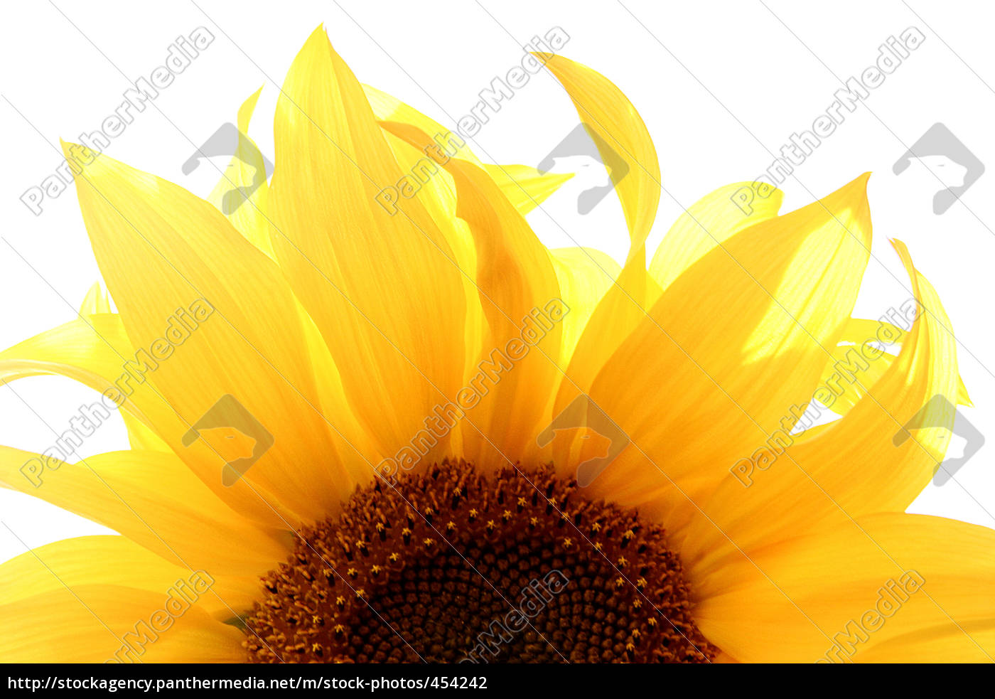 half, sunflower - 454242