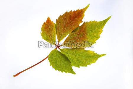 autumnal, battalion, 02 - 457791