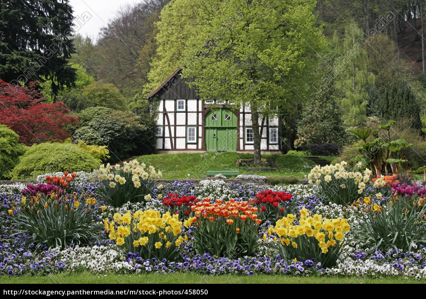 framework, with, tulips, and, daffodils - 458050