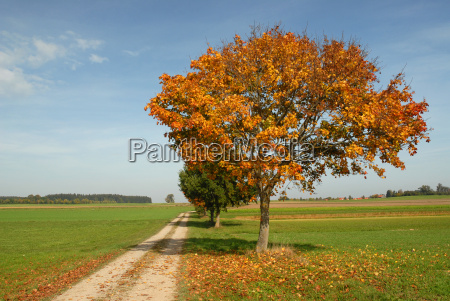 walk, in, autumn - 458297