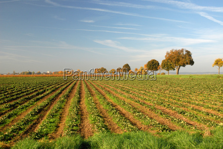 field, in, autumn - 461487