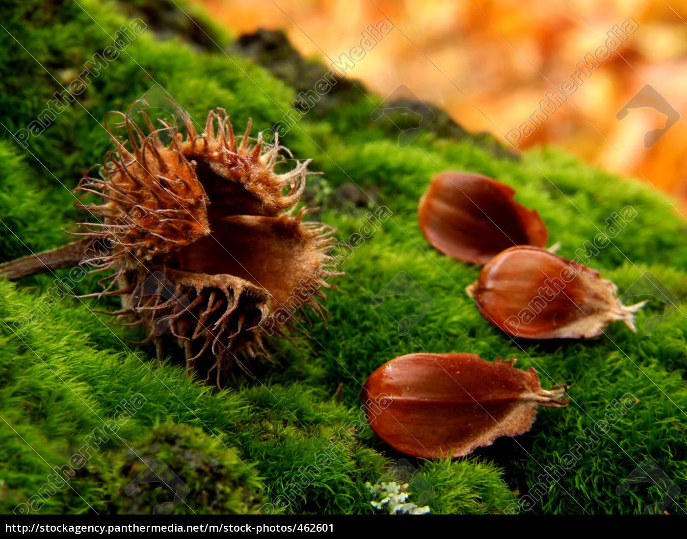 autumn, -, beechers - 462601