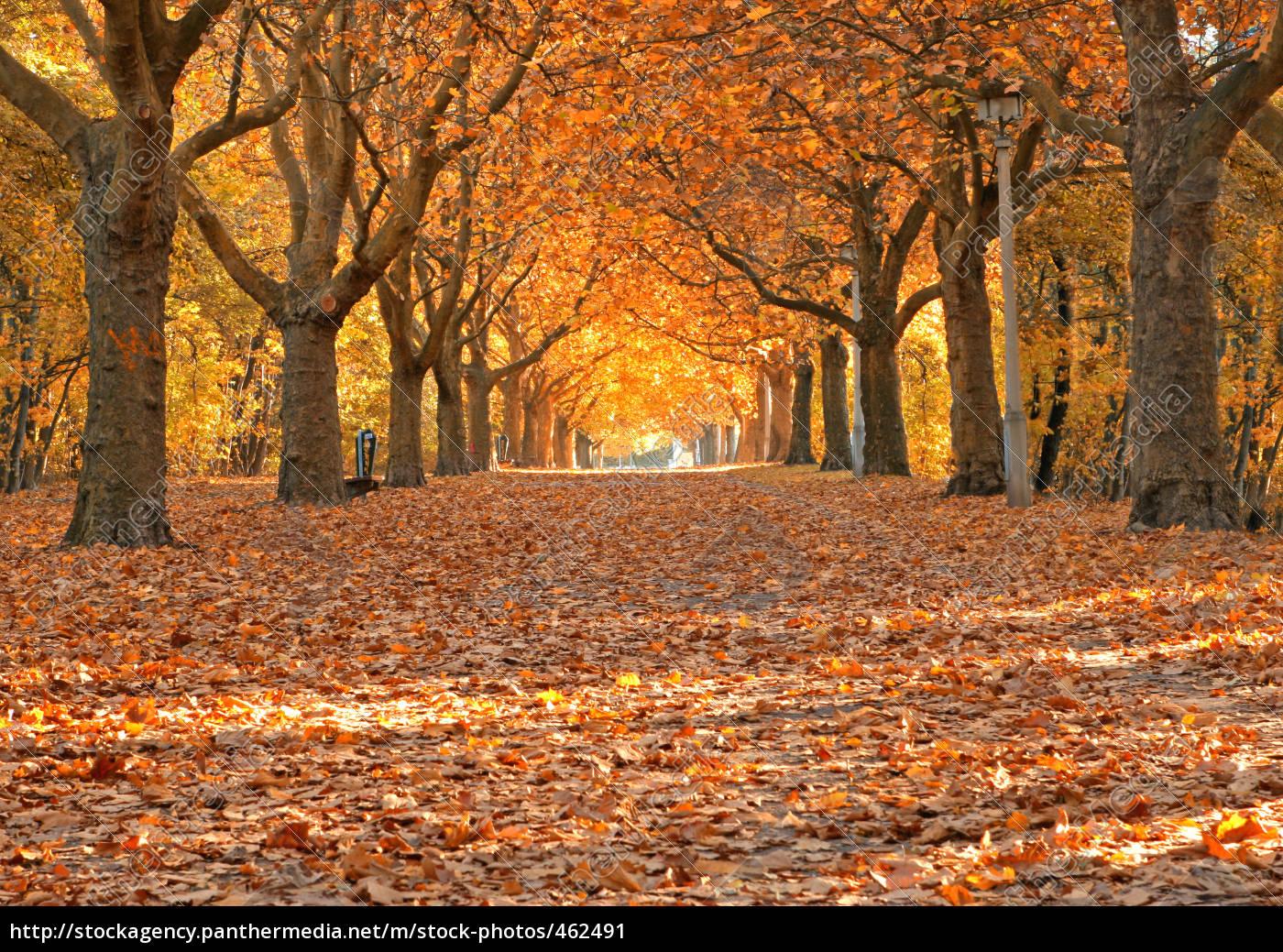 autumn - 462491