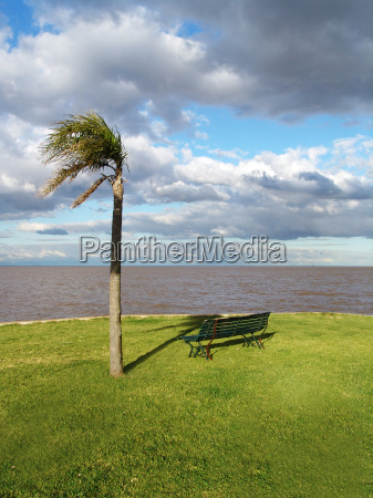 palm, tree, and, bench, in, the - 462082