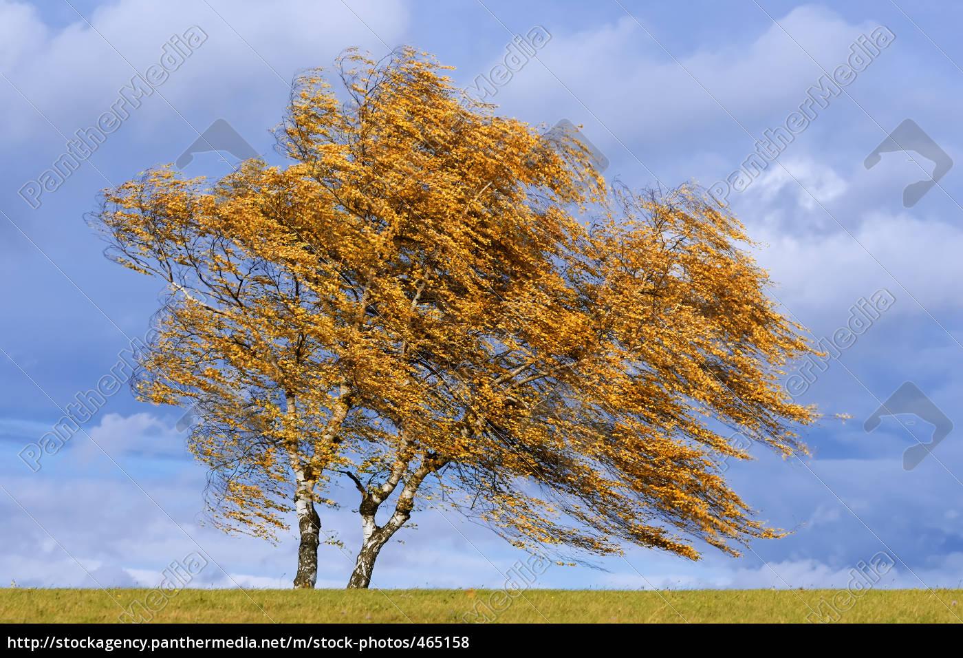 autumn, wind - 465158
