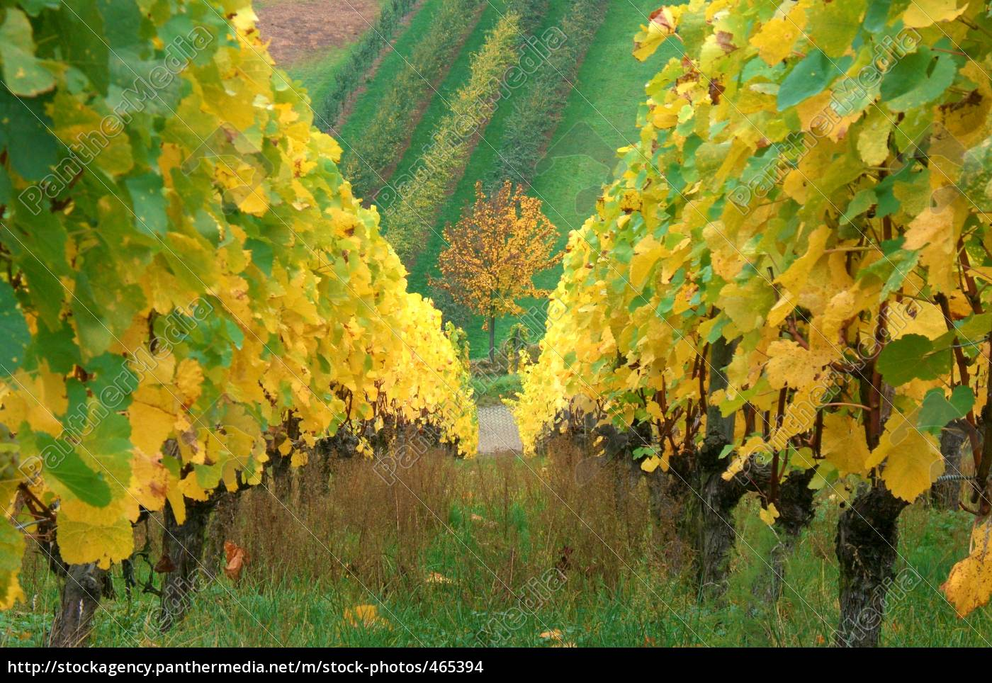 golden, autumn - 465394