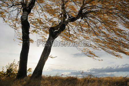 autumn wind iii