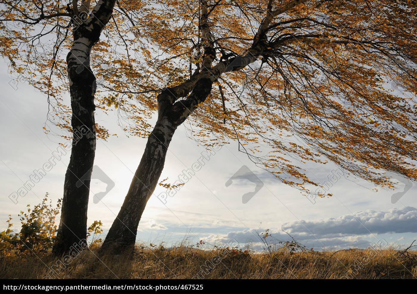 autumn, wind, iii - 467525
