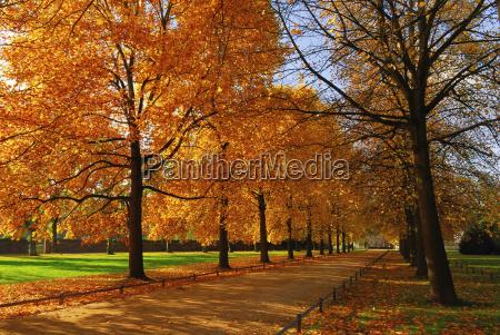 autumn - 470436