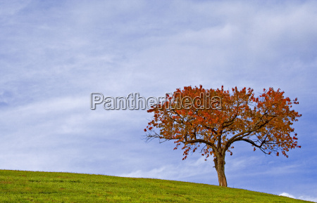 the, tree, ii - 470365