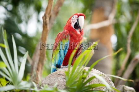 parrot - 479514