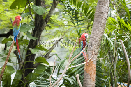 parrots, in, trees - 479511
